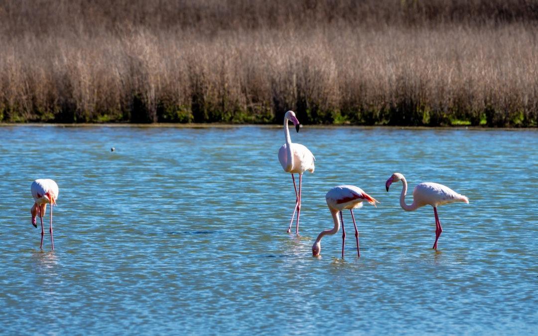 Must see: Laguna de Fuente De Piedra